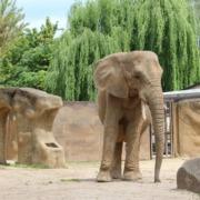 [Extra] Assinaturas são ótimas soluções de fidelização, até para zoológicos